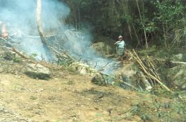 Morador da ilha queimando a mata